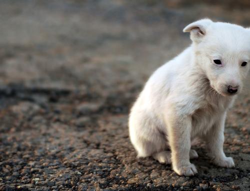 sarna homeopatia cachorro