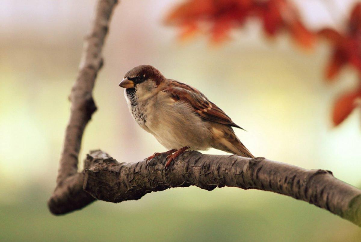 Respiração das aves