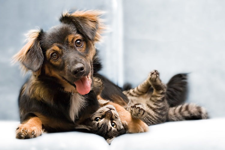 Medicamentos Homeopáticos para Animais