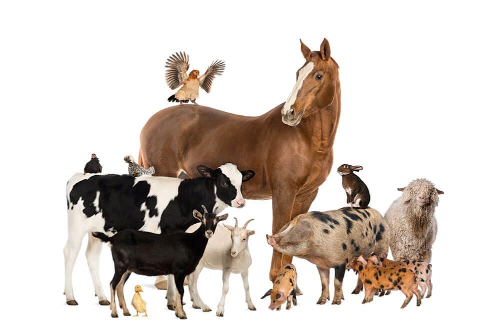 Homeopatia funciona em animais?